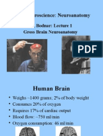 Basic Neuroscience Lecture 1