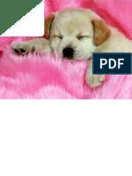 Cachorro a Dormir