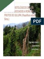 Aspectos Histológicos de La Gulupa