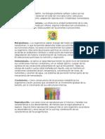 niveles de organizacion (biologia)