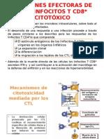 Funciones Efectoras de Los Linfocitos t Cd8