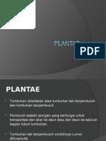 bab-05-plantae.ppt