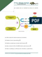 10_12_quimiossintese netexplica