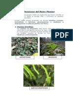 Agrupacion Plantae