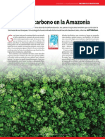 Contar carbono en la Amazonia