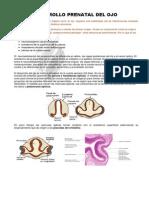 Embrilogia ocular
