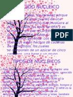 El Acido Nucleico