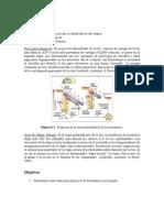 Informe pigmentacion botanica