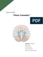 Informe Pares Craneales - Grupo 5.doc