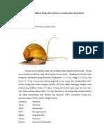 Deskripsi Pomacea canaliculata