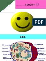 SEL Presentation b