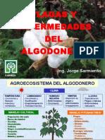 Algodonero - Plagas y Enfermedades - Recomendaciones