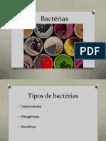PDF Bactérias, Fungos e Protozoários