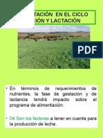 GESTACION Y LACTACIÓN.ppt