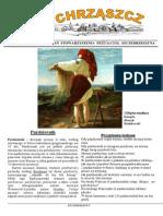 Chrząszcz - Październik 2015 (Nr 115)