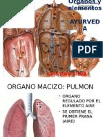 Órganos y Elementos
