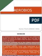 An Aero Bios