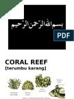 03 terumbu karang