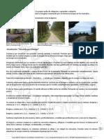 Ejercicio Visualización Guiada-El Bosque