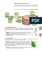 4.+GUIA+TEJIDOS+VEGETALES.docx