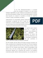 Farmacocinetica y Farmacodinamia Marihuana