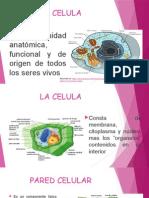 La Estructura y Funcion Celular