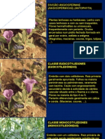 Morfologia Externa Das Plantas Espermatófitas (4)