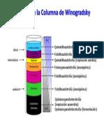 Ecología de La Columna de Winogradsky