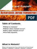 Meiosis and Punnett Squares