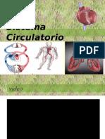 1 Anatomía Del Sistema Circulatorio