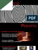 Desarrollo Perceptual[2]