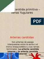 anatomia-carotida.pptx