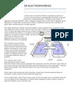 Paper Electrophoresis
