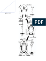 Anatomía de la Madera. Crecimiento y Tronco