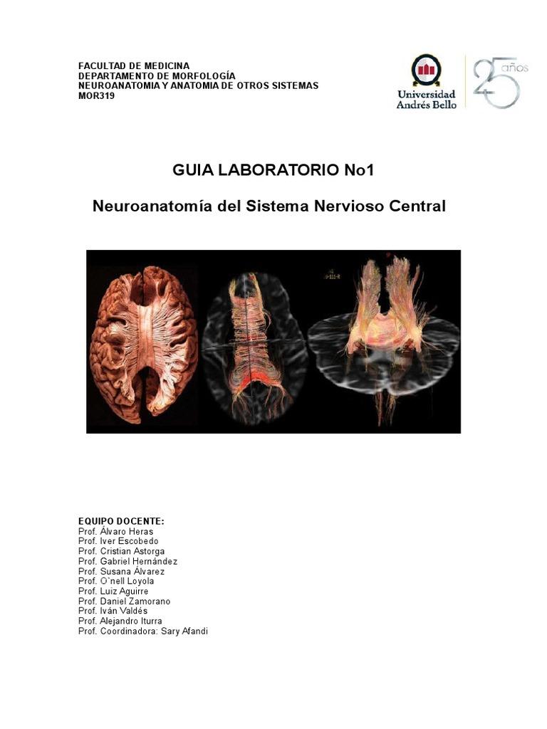 Guía de Anatomía Del Sistema Nervioso Central