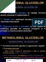 Metabolism Glucide- Anabolism