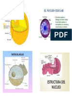Estructura Del Nucleo Celular