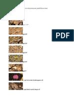 Olivine Optical Mineralogy Properties