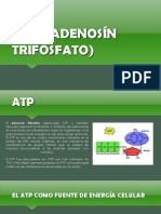 Atp (Adenosín Trifosfato)