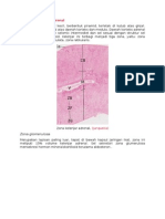 Histologi Kelenjar Adrenal