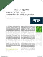 Clorop y Plasmidos