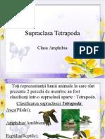 Amphibia Microsoft Office PowerPoint