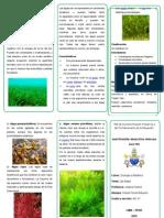 triptico Algas.docx