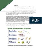 Microorganismos patógenos