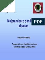 MGA_Alpacas.pdf