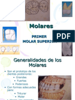 1er Molar Superior.ppt