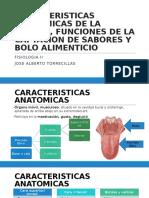 Caracteristicas Anatomicas de La Lengua, Sabores y