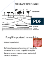 Materiale Didattico Prof. Budroni Funghi