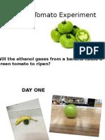 green tomato experiment