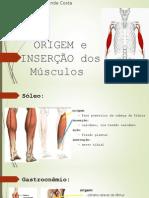 Origem e Inserção Dos Músculos